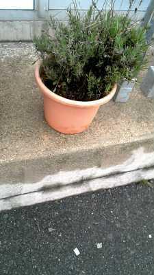 Pot de fleurs d 39 occasion for Cash piscine yvelines